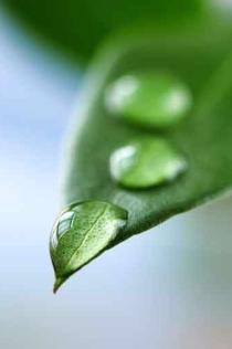 Natur, Immunsystem, Wasser, Schüßler