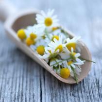 Kamille, sanfte Medizin, Homöopathie, Globuli