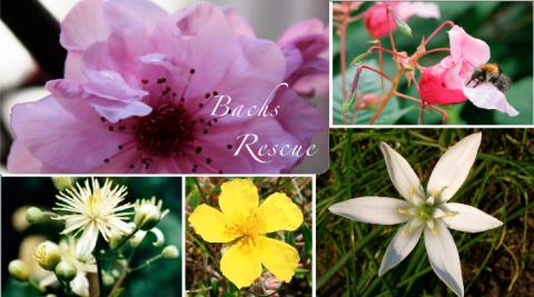 Bachblüten, Rescue, Rescue-Tropfen, Rescuecreme, Homöopathie, Globuli
