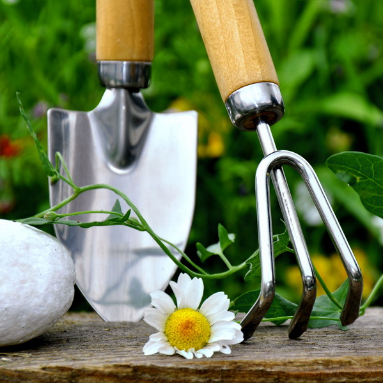 Garten, Pflanzen, Homöopathie für Pflanzen, Globuli, Pulie, Läuse, Schädlinge