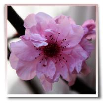 Bachblüten, Rescue, Angst, Panik