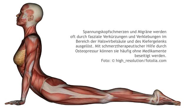 Kopfschmerzen, Migräne, LNB, Liebscher-Bracht, Spannungskofschmerzen, HWS, Kiefergelenk, Globulix, Reichelt