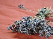 Globuli, Homöopathie, Aromatherapie, ätherische Öle, doTERRA, Lavendel, Muskatellersalbei, Weihrauch, Düfte