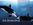 Orca, Heiner Reichelt